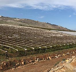 Grape Vines Project